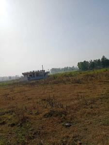 1350 Sq.ft Residential Plot for Sale in Mothrowala, Dehradun