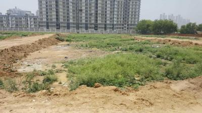 608 Sq.ft Residential Plot for Sale in Sector 104, Gurgaon