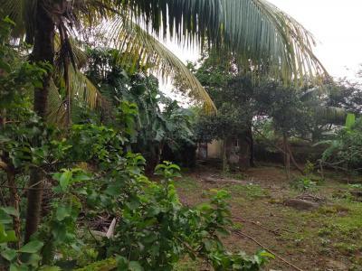 5000 Sq.ft Residential Plot for Sale in Uttan, Mumbai