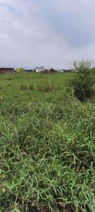 1800 Sq.ft Residential Plot for Sale in Phulwari Sharif, Patna