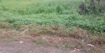Gallery Cover Image of  Sq.ft Residential Plot for buy in Nellikunnu for 31200000