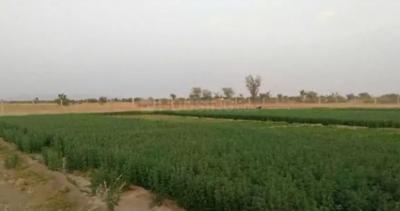 2500 Sq.ft Residential Plot for Sale in Devguradia, Indore