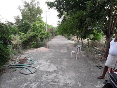 Gallery Cover Image of  Sq.ft Residential Plot for buy in Matiyala for 1200000