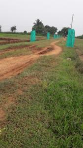 Gallery Cover Image of  Sq.ft Residential Plot for buy in Phulnakhara for 1000000