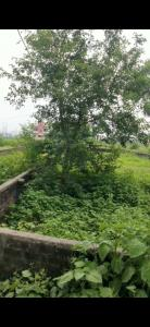 2722 Sq.ft Residential Plot for Sale in Biharimills Colony, Patna