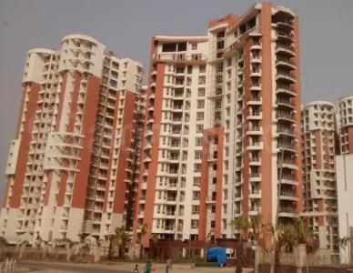 Gallery Cover Image of 1230 Sq.ft 3 BHK Apartment for rent in Phi III Greater Noida for 11000