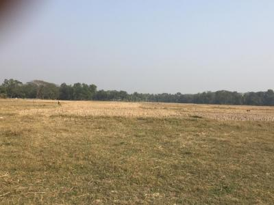 Gallery Cover Image of  Sq.ft Residential Plot for buy in Joka for 400000