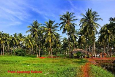 52272 Sq.ft Residential Plot for Sale in Moodbidri, Mangalore
