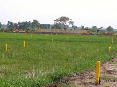 Gallery Cover Image of  Sq.ft Residential Plot for buy in Rasapunja for 500000