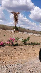 Gallery Cover Image of  Sq.ft Residential Plot for buy in Veterinary Colony for 699939