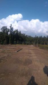 107 Sq.ft Residential Plot for Sale in Aamwala, Dehradun