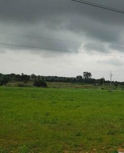 Gallery Cover Image of  Sq.ft Residential Plot for buy in Mansanpally for 3500000
