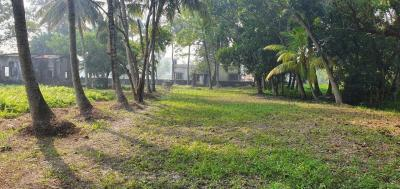 Gallery Cover Image of  Sq.ft Residential Plot for buy in Paschim Barisha for 2000000