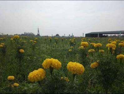 कृषि भूमि
