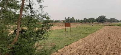 800 Sq.ft Residential Plot for Sale in Danapur, Patna