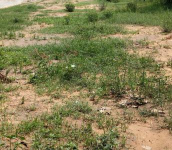 Gallery Cover Image of  Sq.ft Residential Plot for buy in Sector 39 for 25650000