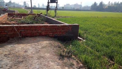 59 Sq.ft Residential Plot for Sale in Dhunela, Gurgaon