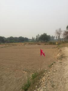 10000 Sq.ft Residential Plot for Sale in Dharsania, Barabanki