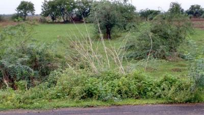 Gallery Cover Image of  Sq.ft Residential Plot for buy in Veterinary Colony for 1200000