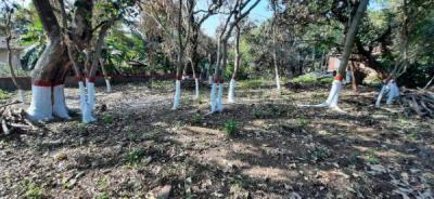 18500 Sq.ft Residential Plot for Sale in Nagaon, Alibag