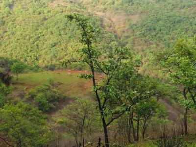 11000 Sq.ft Residential Plot for Sale in Balewadi, Pune