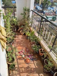 Gallery Cover Image of 1076 Sq.ft 2 BHK Apartment for rent in Krishnarajapura for 17500