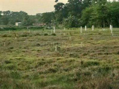Gallery Cover Image of  Sq.ft Residential Plot for buy in Rasapunja for 325000