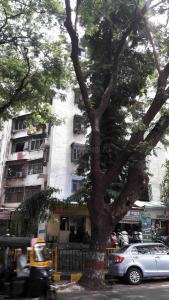 Gallery Cover Image of 600 Sq.ft 1 BHK Apartment for rent in Borivali West for 15000