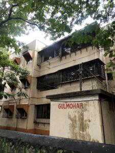 Gallery Cover Pic of National Gulmohur