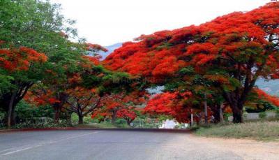 Shriram Gulmohar Park