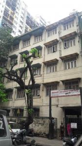 Schools & Universities Image of 450 Sq.ft 1 RK Apartment for rent in Prabhadevi for 10000