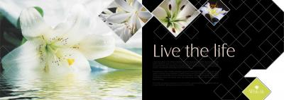 Alliance White Lily Brochure 2