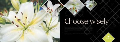 Alliance White Lily Brochure 3