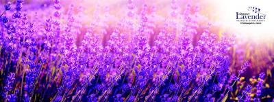 Crescent Lavender Brochure 1