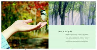 Dhaatri Auravilla  Brochure 7